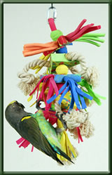Parrot with Toy